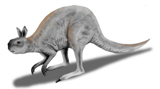 The giant kangaroo: Procoptodon.