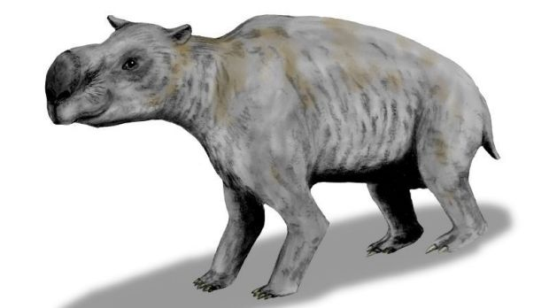 The wombat-like Diprotodon was one of Australia's megafauna.