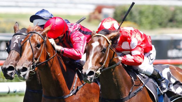 The winners keep coming: Tim Clark rides Perignon (right) to victory in the Light Fingers Stakes at Randwick.