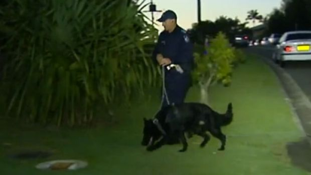 The dog squad searches for the man who attacked a woman in her home in Southport in February.