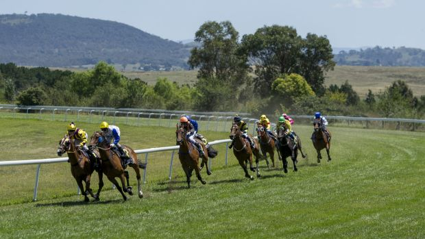 Horses head into the straight at Queanbeyan race course last month.