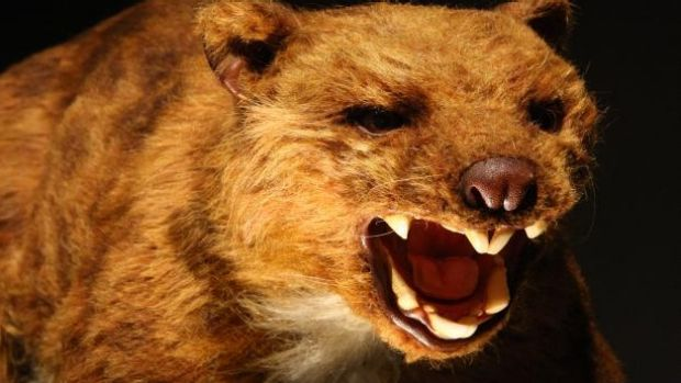 "If ever there was a creature that could be called a ""drop bear"", it was the tree-climbing 100 kilogram marsupial lion."