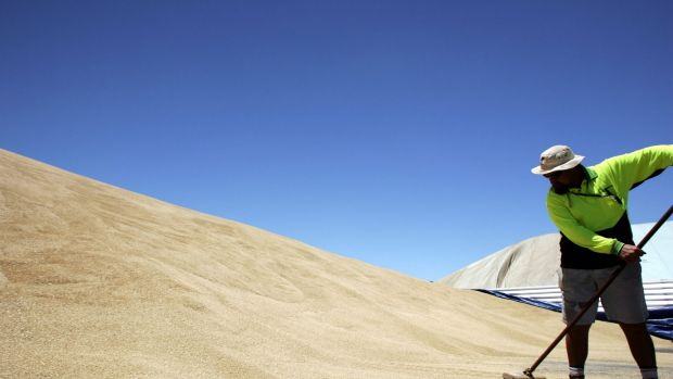 Graincorp expects exports to fall.
