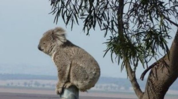 Humans and animals in the Liverpool Plains area will be affected by new government policy regulating the control of ...