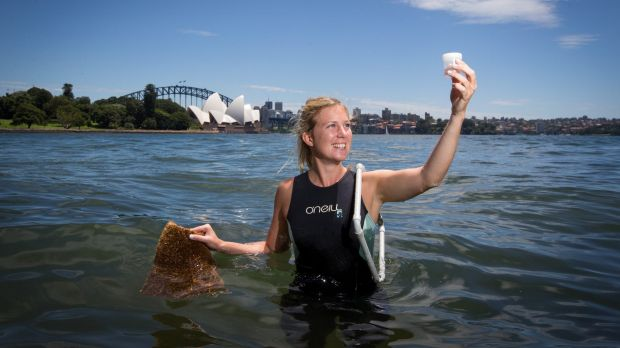 Marine ecologist Rebecca Morris installing new seawall pots along the Sydney Harbour at the Royal Botanic Gardens.