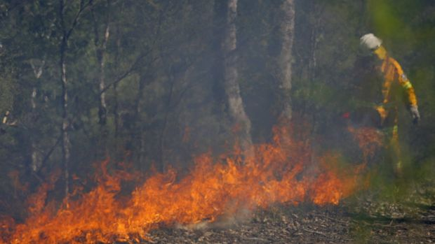 A Rural Fire Service member carries out hazard reduction burns.