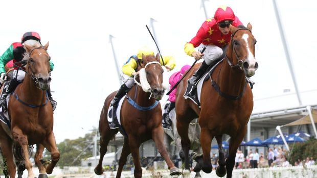Hanging on: Blake Shinn and First Seal edge out Telepathic in the Millie Fox Stakes at Rosehill.