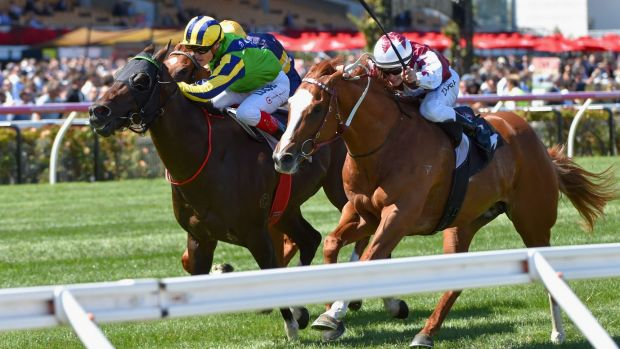 Back for more: Tivaci will be seeking further success at Flemington.