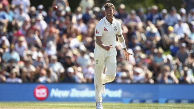 Backed: James Pattinson celebrates taking the wicket of Martin Guptill.