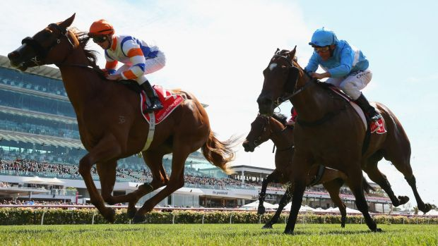 Slipper chance: Concealer, left, could have a crack at the Golden Slipper Stakes if she is successful in the Blue ...