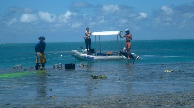 Researchers, including Sydney University's Kennedy Wolfe (at right), at One Tree Island's reef.