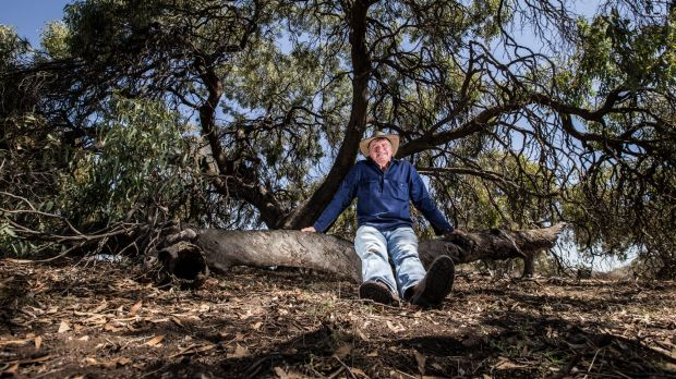 Gunbower farmer John Toll is one of many farmers who appreciates the benefit of trees. He has planted 35,000 to 40,000 ...