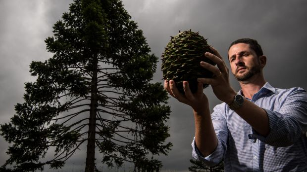 John Siemon, curator and manager of the Australian Botanic Garden, Mount Annan, with a 2.7-kilogram seed from a ...