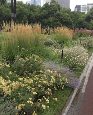 One of Paul Bangay's perennial beds outside MPavilion at Queen Victoria Gardens in 2016.