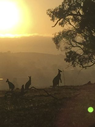 Jonathan DePuit - Summer dawn on Mt Majura whilst mountain biking to work.