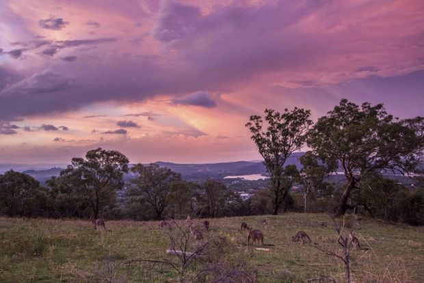 Graeme Taylor - After the storm: Kangaroos on Red Hill.