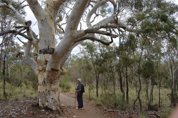 Ric Hingee - Walking amongst the giants on Mt Ainslie.