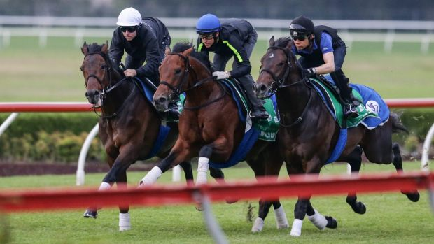Visitor: Tosen Stardom (left) will be the only Japanese galloper to contest The Championships this year.