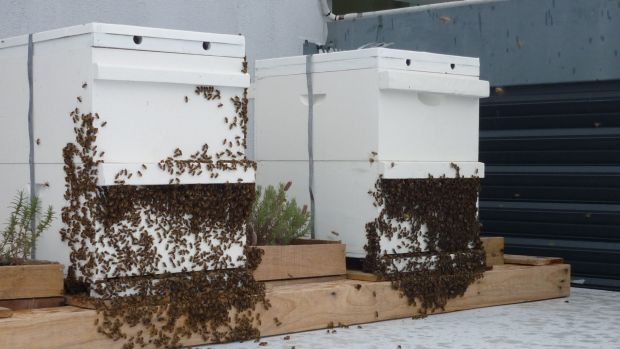 The beehives sit on the rooftop at the Emporium Hotel, Fortitude Valley.