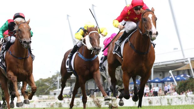 She's back: Jockey Blake Shinn and First Seal have the chance to claim a group 1 win on Saturday.