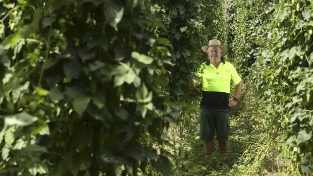 Allan Monshing, farm manager of Rostrevor Hop Gardens in Eurobin, is a third-generation hops farmer.