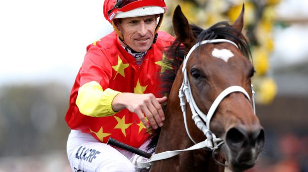 Keeping the faith: Trainer Chris Waller is backing Press Statement despite him having his colours lowered at Randwick.