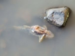 """Residents have described the scene of dead eels and fish at Devlins Creek as """"carnage."""""""