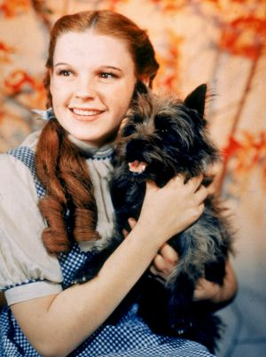 The terrier which played Toto in <i>The Wizard of Oz</i> had her foot broken in the course of filming.