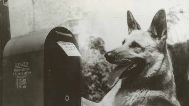 Rin Tin Tin had a remarkable screen presence and an extraordinary ability to take direction.