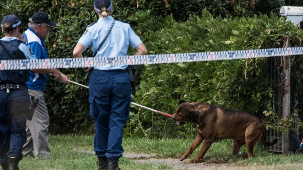 Dog handlers removing one of the man's rottweilers from his Riverstone home last week.