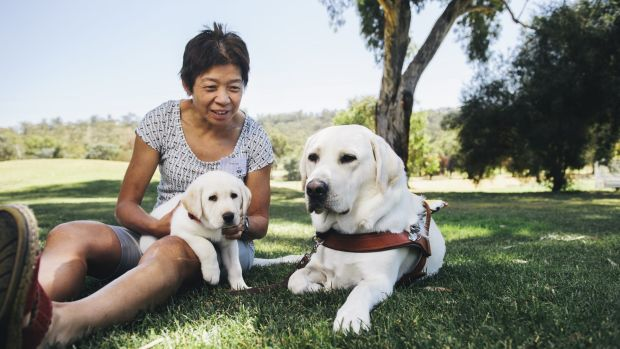 Lindy Hou with her guide dog Comet and eight-week-old puppy, Wanda, who is about to go into guide dog training.