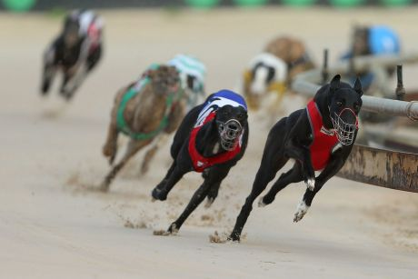 End of the race: With greyhound racing to shut down in NSW, what's to become of Wentworth Park?