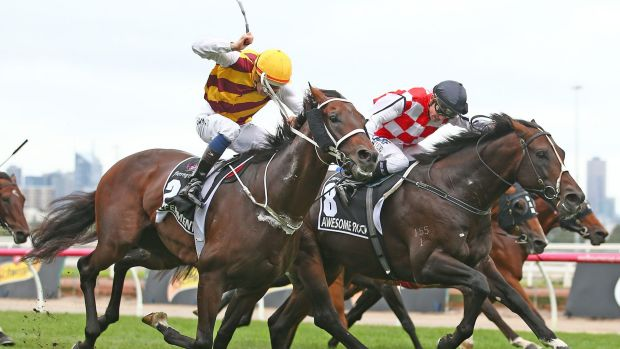 Heartache: Stephen Baster on Awesome Rock edges out  Hugh Bowman on Preferment but then lost on protest.