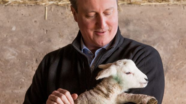 Lambs to the slaugher: David Cameron has delayed  publication of the Iraq war report.