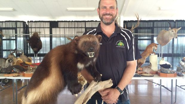Ipswich firefighter Daniel Feeney standing next to a wolverine from Canada.
