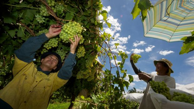 """The federal government has said """"critical safeguards"""" have been built into the seasonal worker program."""