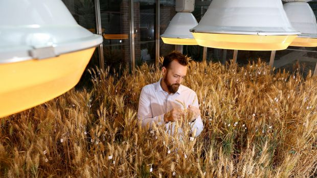 Dr Lee Hickey, from the Queensland Alliance for Agriculture and Food Innovation at the University of Queensland, ...