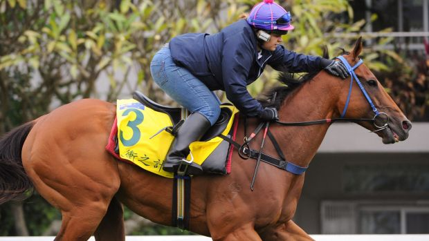 Old champ: Buffering is in great shape for his tilt at the big Dubai sprint.