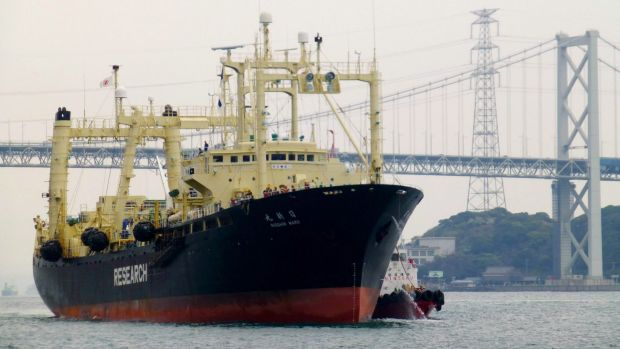 Japanese whaling vessel Nisshin Maru returns to port from the Antarctic Sea in 2014.