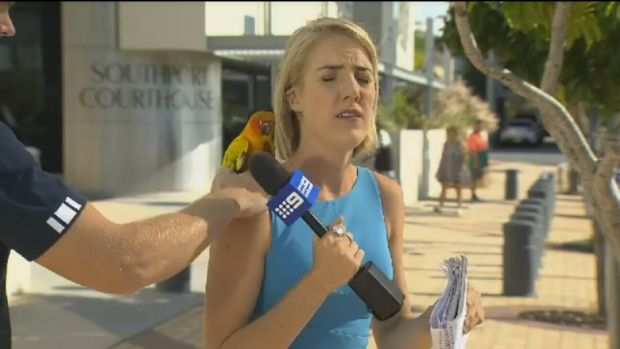 Nine News reporter Brittney Kleyn has a bird land on her shoulder on camera.