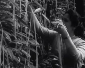 "A Swiss woman ""harvests"" fresh spaghetti in the legendary April Fools segment."