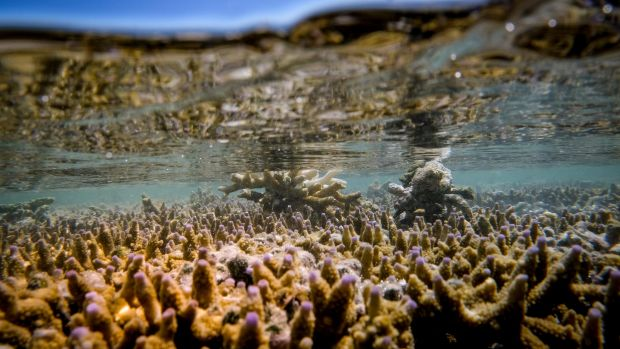 Coral bleaching at Heron Island on the Great Barrier Reef.