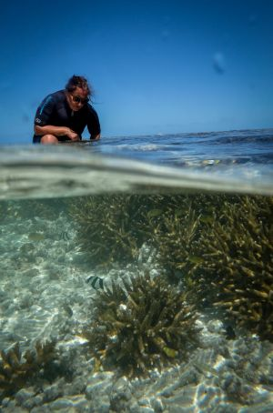 Dr Selina Ward, senior lecturer, School of Biological Sciences, University of Queensland, checking out the acropora ...