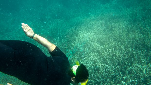 Experimental work conducted at the Great Barrier Reef indicates that increased stress from ocean acidification is ...