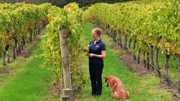 Wine industry receives boost for exports