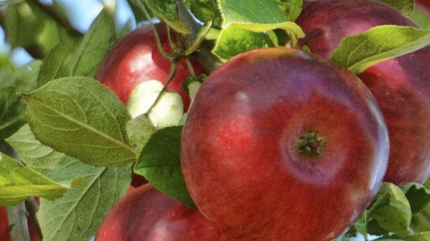 Innovate Ag founder Nick Watts believes the company's natural pesticide can help grow flawless organic fruit.