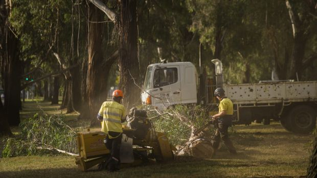 Tree removal under way on Canberra's Northbourne Avenue last week.