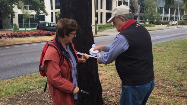 CanTheTram protesters Dr Jenny Stewart and Max Flint put white ribbon around Northbourne Avenue trees slated to be ...