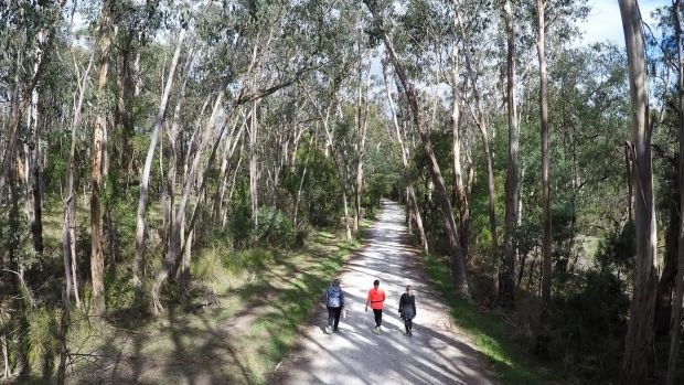 The Lilydale to Warburton Rail Trail at Seville.