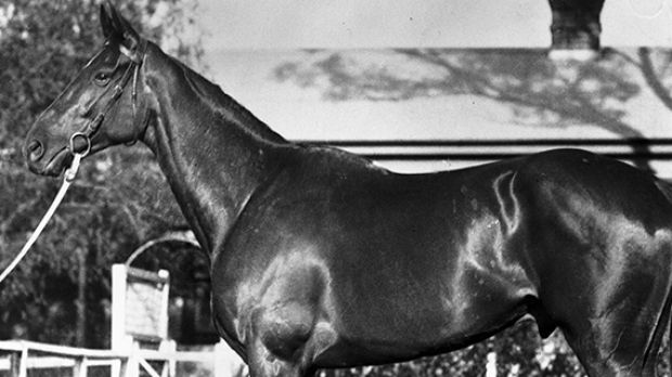 Phar Lap: transcended the hard times and struggle of the '30s to show people something extraordinary.